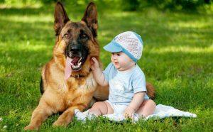 Немецкая овчарка и дети