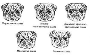 Разновидности глаз у мопса
