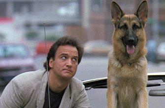 Известные собаки - пушистые герои из кино и мультфильмов.