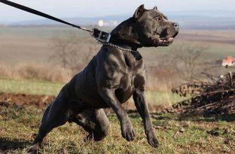 13 пород собак в списке МВД - список, правила, санкции за нарушения.